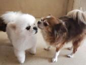 DOG BOND